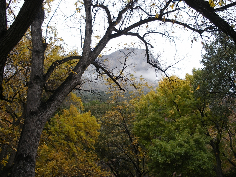 Autumn Mist in Oak Creek Canyon